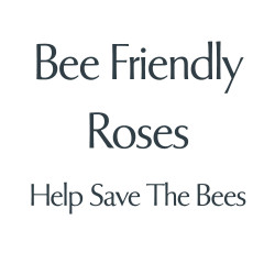 Bee Friendly Roses
