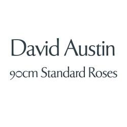 David Austin - 90cm Standards