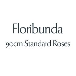 Floribunda - 90cm Standards