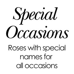 Special Occasion Roses