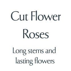 Cut Flower Varieties