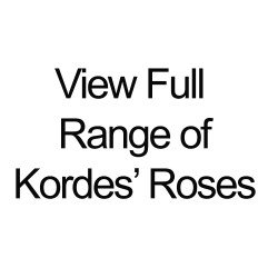 Kordes® Full Range of Roses