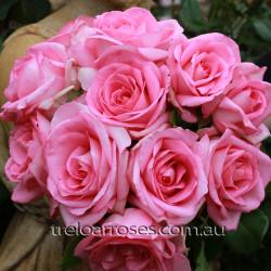 Perfume Passion - 90cm Standard