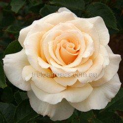 Isn't She Lovely - 90cm Standard