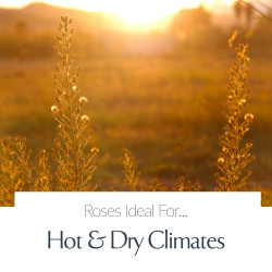 Hot and Dry Climates
