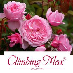 Climbing Max® Collection