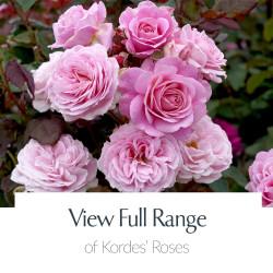 Kordes® Full Range of Roses