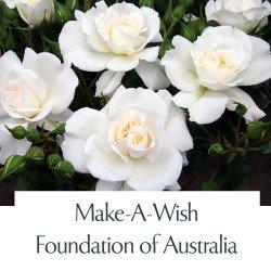 Make-A-Wish Foundation of Australia
