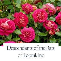 Descendants of the Rats of Tobruk Inc