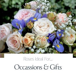 Occasions & Gifts