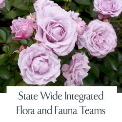 State Wide Integrated Flora and Fauna Teams