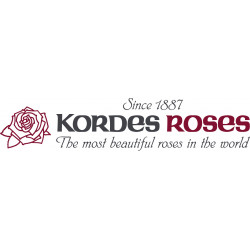 Kordes' Roses