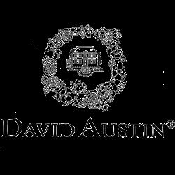 David Austin Roses