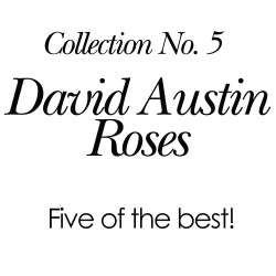 2018 Collection No. 5 - David Austin Roses (Five of the best)