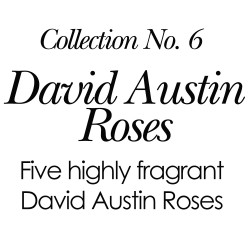 2018 Collection No. 6 - David Austin Roses (High Fragrant)