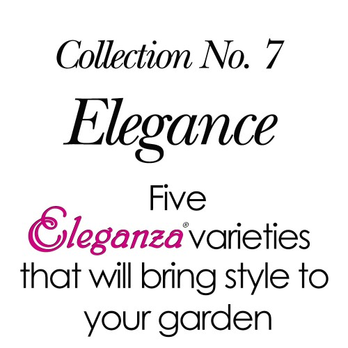 2018 Collection No. 7 - Elegance