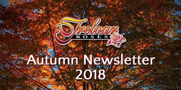 Treloar Roses - Summer Newsletter